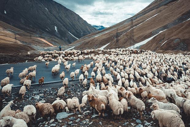 Грузинская инициатива: почувствуй себя пастухом!