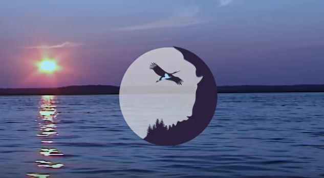 На новом логотипе заповедника – чёрный аист и зубр