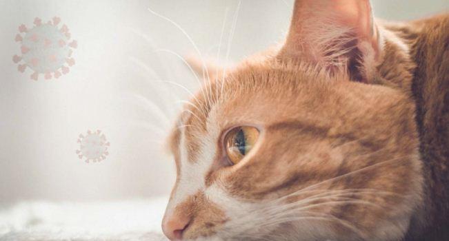 Рекламу лечения коронавируса у кошек признали недостоверной