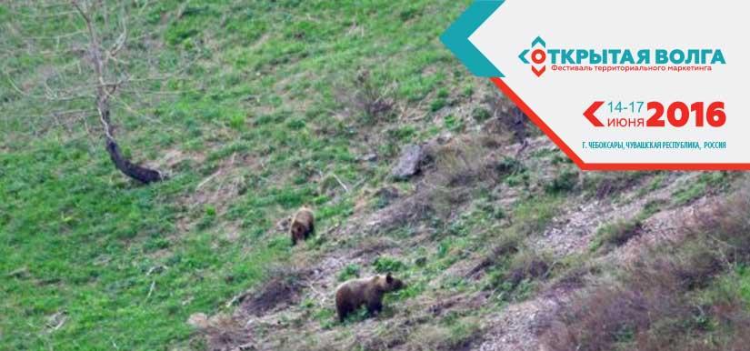 Казахстанец зовёт туристов на Рудный Алтай посмотреть на медведей