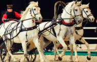 «Иппосфера» развивает конный спорт