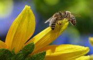«Бешеная пчёлка» неудачно наехала на «Пчёлку Жу-Жуку»