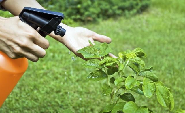 Реклама средств защиты растений попала под контроль